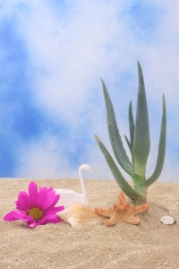 3 Advantages of Aloe Vera Products – From Lotions and Gels to Aloe Juice