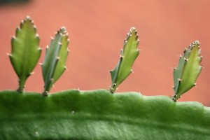 What Are The Various Aloe Vera Side Effects?