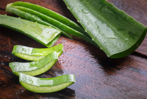 Harvesting Aloe Gel from Your Plant