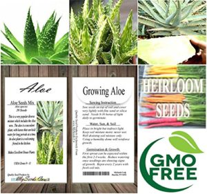 Where to By Aloe Seeds and Plants